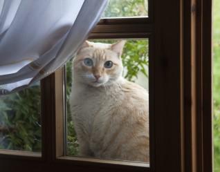 De gats i altres animalons